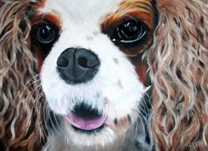 Hondje alleen gezicht