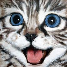 Een blije kat